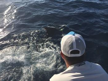 Yessssssssssssss Cavalier & Blue Marlin Sport Fishing Gran Canaria