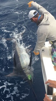260 kg Blue Marlin released by Stan Vos from Holland Cavalier & Blue Marlin Sport Fishing Gran Canaria