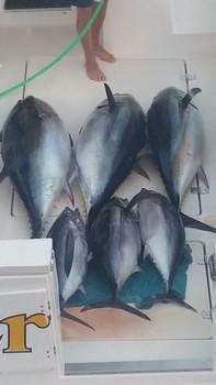 Albacore & Big Eye - Great Tuna Catch Cavalier & Blue Marlin Sport Fishing Gran Canaria