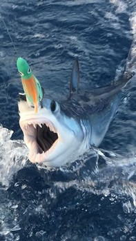 Small Mako Cavalier & Blue Marlin Sport Fishing Gran Canaria