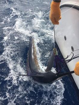 5th place for Klaas Westerhof Cavalier & Blue Marlin Sport Fishing Gran Canaria