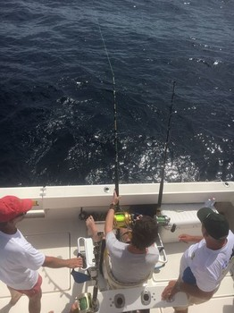 Hooked up - Hooked Up Cavalier & Blue Marlin Sport Fishing Gran Canaria