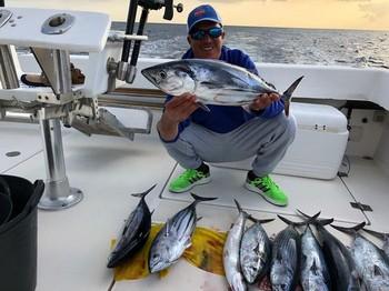 Skipjack Tuna - Skipjacks caught on the boat Cavalier Cavalier & Blue Marlin Sport Fishing Gran Canaria