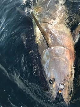 275 kg Bluefin Cavalier & Blue Marlin Sport Fishing Gran Canaria