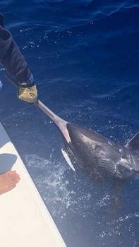 Blue Marlin 300 lbs Cavalier & Blue Marlin Sport Fishing Gran Canaria