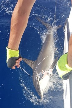 Well done - Hooked Up Cavalier & Blue Marlin Sport Fishing Gran Canaria