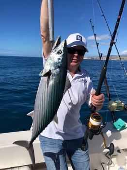 Bonito del Atlántico Norte Pesca Deportiva Cavalier & Blue Marlin Gran Canaria