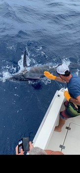 550 lbs Blue Marlin Cavalier & Blue Marlin Sport Fishing Gran Canaria