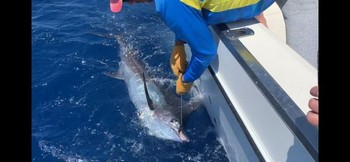 June Photo Archive 2019 Cavalier & Blue Marlin Sport Fishing Gran Canaria