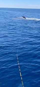 Wooooooow Cavalier & Blue Marlin Sport Fishing Gran Canaria