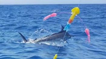 July Photo Archive 2019 Cavalier & Blue Marlin Sport Fishing Gran Canaria