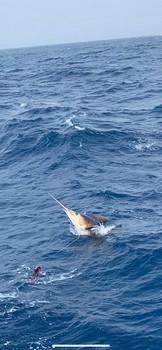 August Photo Archive 2019 Cavalier & Blue Marlin Sport Fishing Gran Canaria