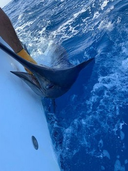September Photo Archive 2019 Cavalier & Blue Marlin Sport Fishing Gran Canaria