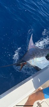 October Photo Archive 2019 Cavalier & Blue Marlin Sport Fishing Gran Canaria
