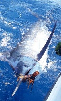 New Years Eve Cavalier & Blue Marlin Sport Fishing Gran Canaria