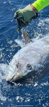 440 lb Bluefin Cavalier & Blue Marlin Sport Fishing Gran Canaria