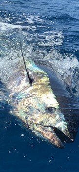 March Photo Archive 2020 Cavalier & Blue Marlin Sport Fishing Gran Canaria