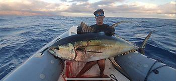 Yellow fin tuna Cavalier & Blue Marlin Sport Fishing Gran Canaria