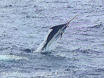 Blue Marlin Cavalier & Blue Marlin Sport Fishing Gran Canaria