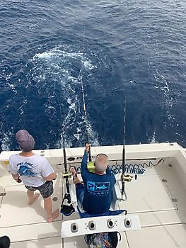 The show goes on! Cavalier & Blue Marlin Sport Fishing Gran Canaria