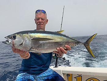 Yellowfin tuna Cavalier & Blue Marlin Sport Fishing Gran Canaria