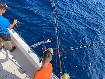 While Marlin Cavalier & Blue Marlin Sport Fishing Gran Canaria