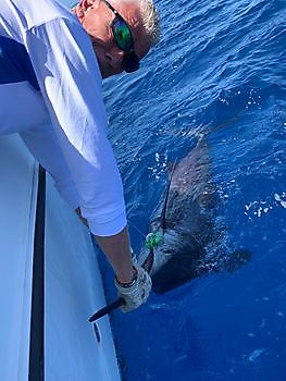 https://www.bluemarlin3.com/nl/release-me Cavalier & Blue Marlin Sport Fishing Gran Canaria