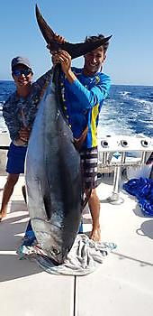 Bigeye Tuna Tuna Cavalier & Blue Marlin Sport Fishing Gran Canaria