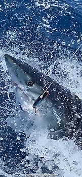 Mako shark Cavalier & Blue Marlin Sport Fishing Gran Canaria