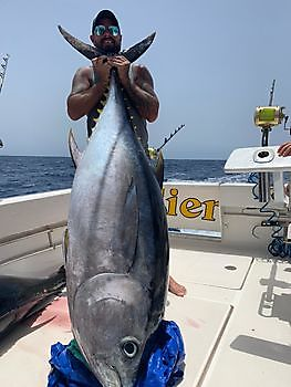 https://www.bluemarlin3.com/nl/bigeye-tuna Cavalier & Blue Marlin Sport Fishing Gran Canaria