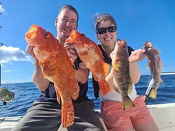 Scorpion fisk Cavalier & Blue Marlin Sport Fishing Gran Canaria
