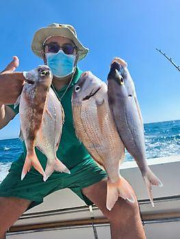 Spanish Sea Breams Cavalier & Blue Marlin Sport Fishing Gran Canaria