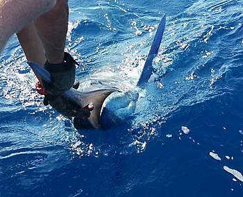 Memories Cavalier & Blue Marlin Sport Fishing Gran Canaria