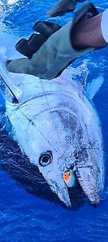 Bluefin Tuna Nr 7 & 8 Cavalier & Blue Marlin Sport Fishing Gran Canaria