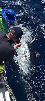 1/2 Blauwvin tonijn Cavalier & Blue Marlin Sport Fishing Gran Canaria