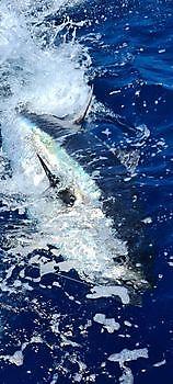 Joyeuses fêtes Cavalier & Blue Marlin Sport Fishing Gran Canaria