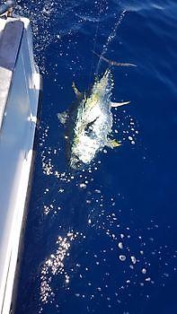 Atún patudo Pesca Deportiva Cavalier & Blue Marlin Gran Canaria