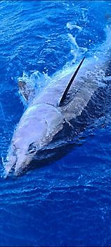 Welcome Cavalier & Blue Marlin Sport Fishing Gran Canaria