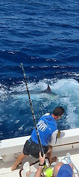 1st Blue Marlin of 2021 released Cavalier & Blue Marlin Sport Fishing Gran Canaria