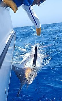https://www.bluemarlin3.com/sv/blue-marlin Cavalier & Blue Marlin Sport Fishing Gran Canaria