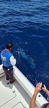 https://www.bluemarlin3.com/es/400-lb-blue-marlin-ademas-del-bote Pesca Deportiva Cavalier & Blue Marlin Gran Canaria