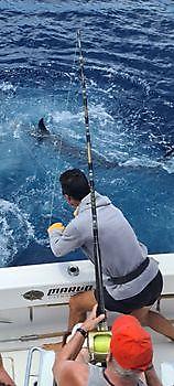 https://www.bluemarlin3.com/es/felicidades Pesca Deportiva Cavalier & Blue Marlin Gran Canaria
