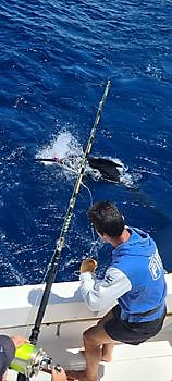 https://www.bluemarlin3.com/es/marlin-azul Pesca Deportiva Cavalier & Blue Marlin Gran Canaria