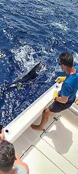 Welcome Cavalier & Blue Marlin Sport Fishing Gran Canaria