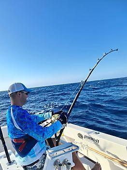 1/2 Blauwe Marlijn Cavalier & Blue Marlin Sport Fishing Gran Canaria