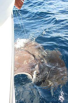 Release Me Cavalier & Blue Marlin Sportfischen Gran Canaria