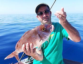 Roter Schnappfisch Cavalier & Blue Marlin Sportfischen Gran Canaria