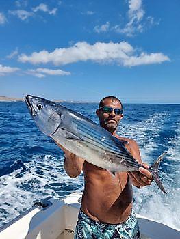 Nordatlantik Bonito Cavalier & Blue Marlin Sportfischen Gran Canaria