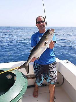 King fish Cavalier & Blue Marlin Sport Fishing Gran Canaria