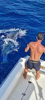 300 & 550 lbs Blue Marlin Released Cavalier & Blue Marlin Sport Fishing Gran Canaria
